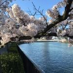 2016.4.2 花見@大川沿い、都島
