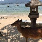 【日帰り旅行】2回目の宮島 厳島神社